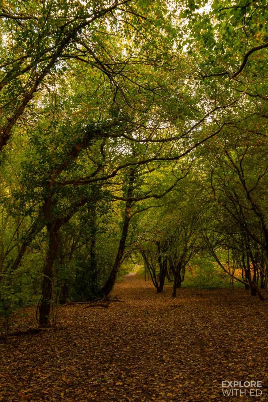 St Julian's Woodland in Newport