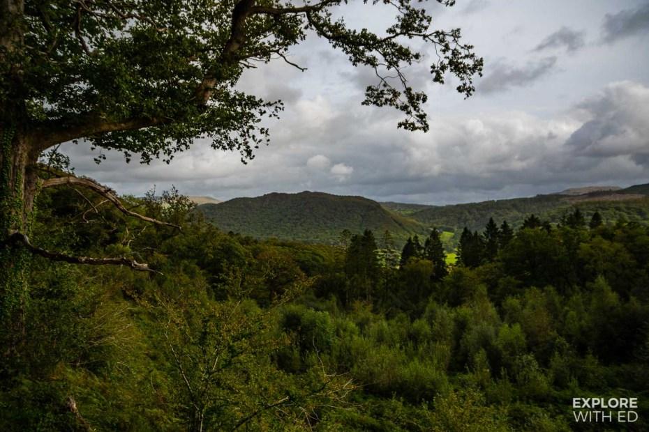 Tree top and river valley views near Tan-Y-Bwlch on Ffestiniog Railway train ride