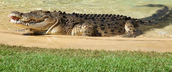 SNAPSHOT: Australia Zoo