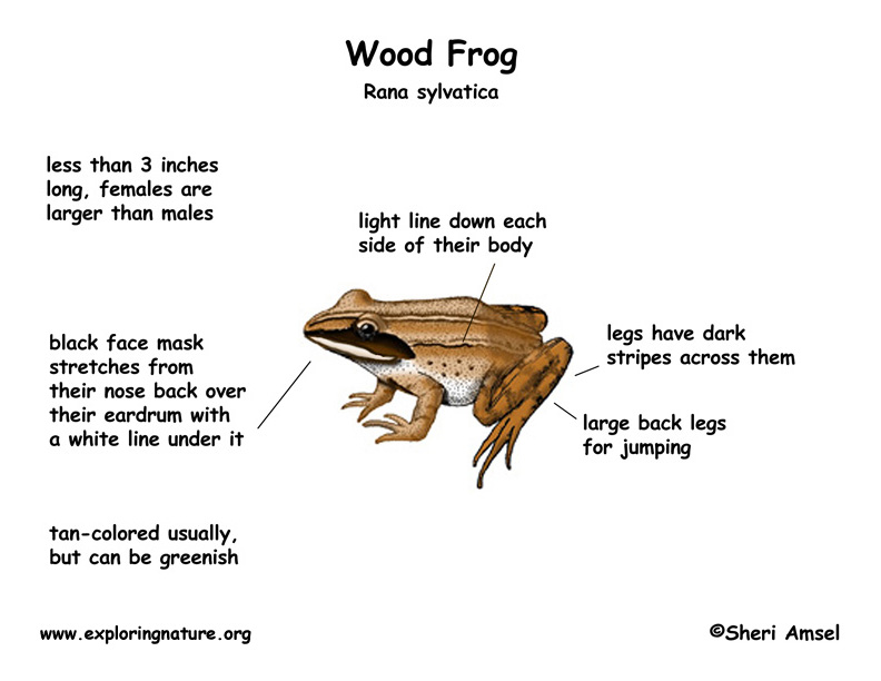 Printable Frog Body Parts