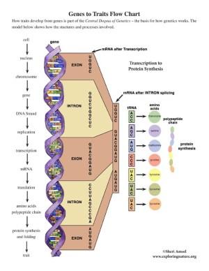 Grade 68  MSLS3 Heredity: Inheritance and Variation of