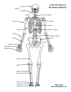 Skeleton (Labeled) Coloring Page