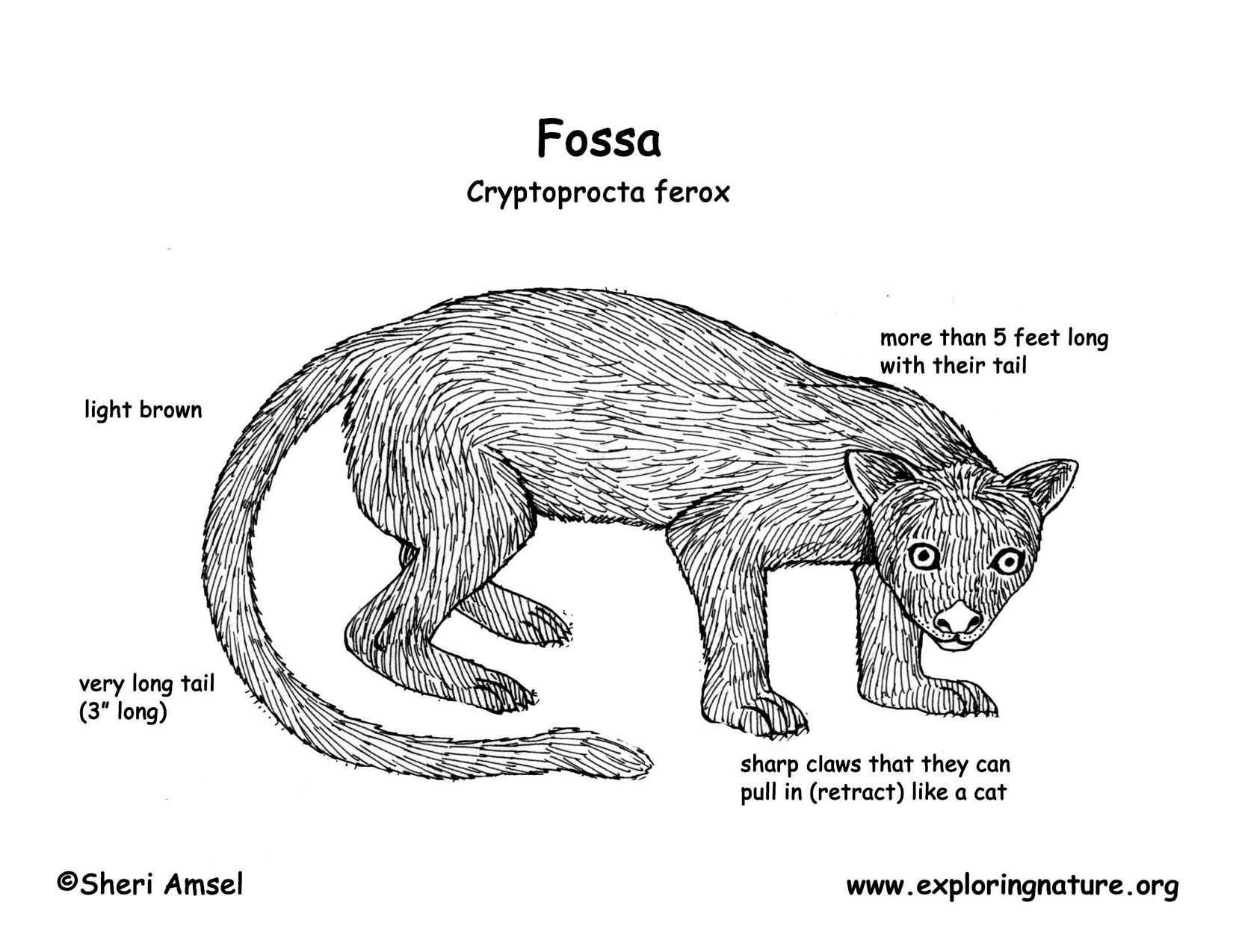 Fox Diagram Pictures To Pin