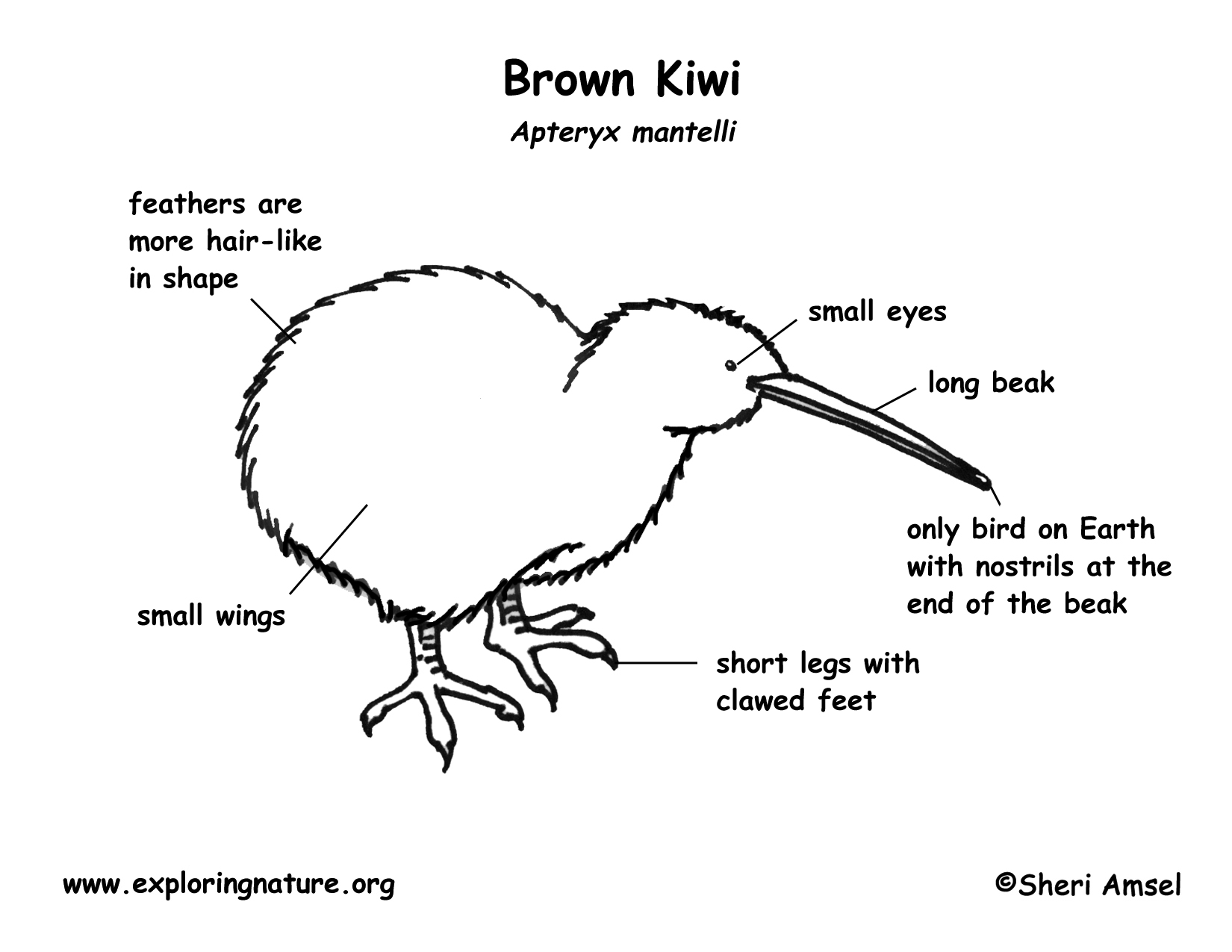 Kiwi Brown