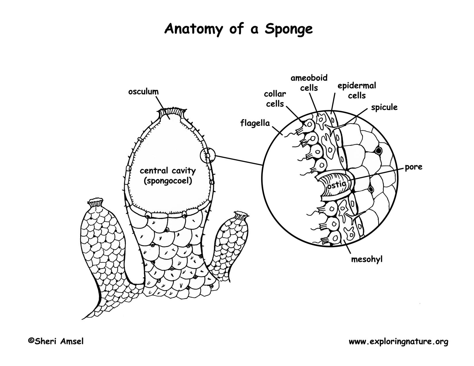 Sponge Labeled Gallery