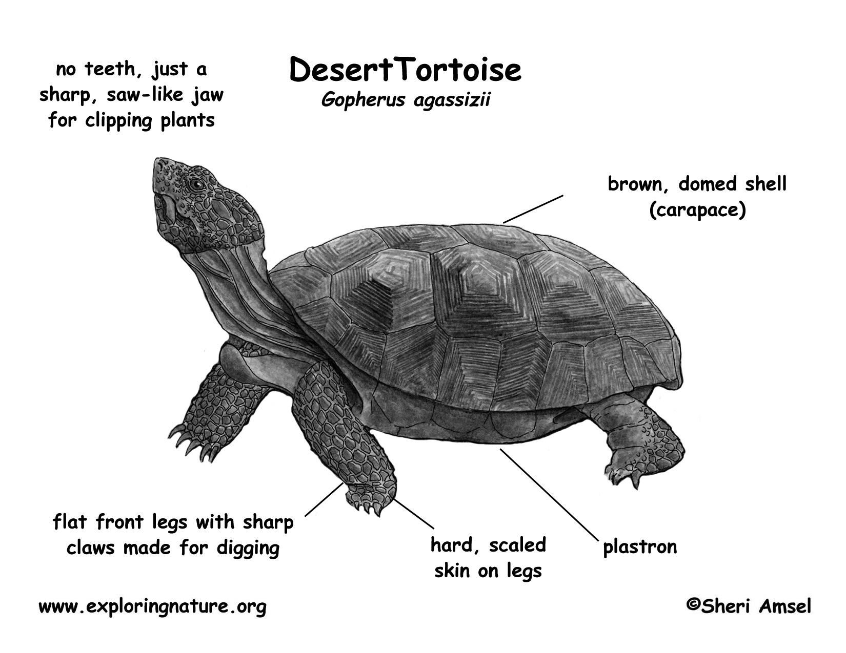 Egg In A Sea Turtle Diagram