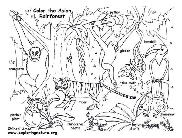 rainforest coloring page # 11
