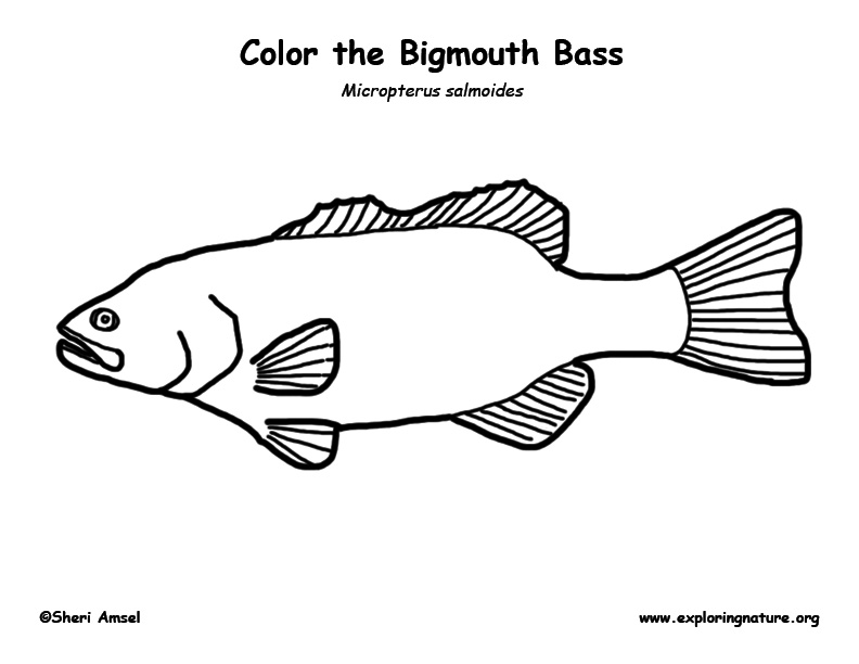 bass fish coloring pages smallmouth bass fish coloring pages