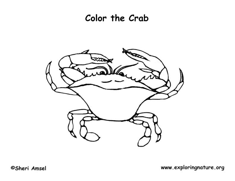 blue crab colouring pages