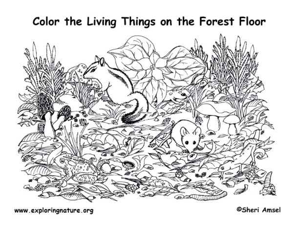 forest coloring page # 29
