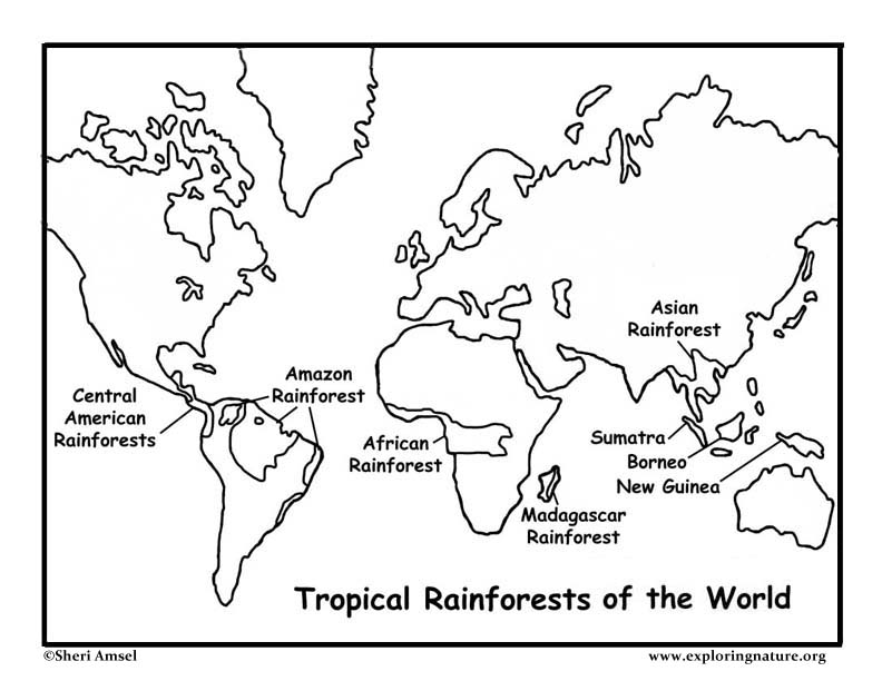 rainforest page on worksheet