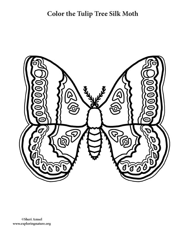 silk moth coloring page rothschilds silk moth coloring page free