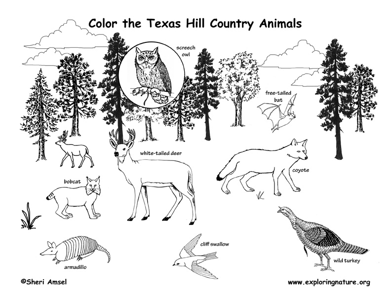 Texas Panhandle And Prairie Animals Labeling Page