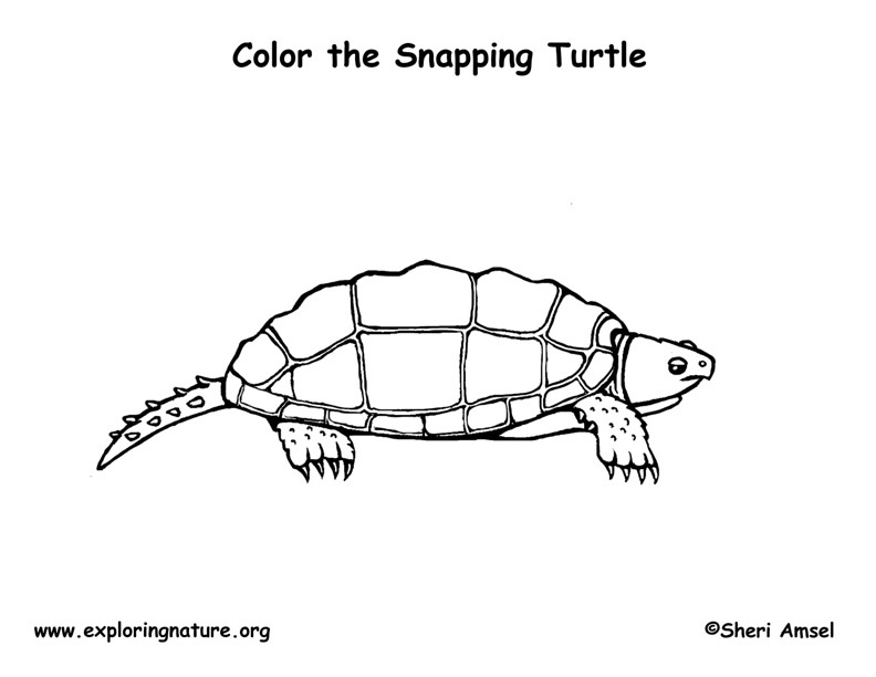 snapping turtle coloring page