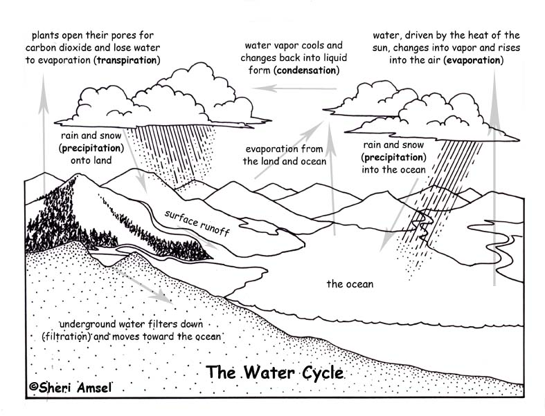 The water cycle essay