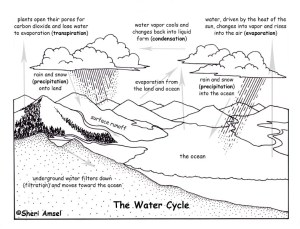 Water Cycle