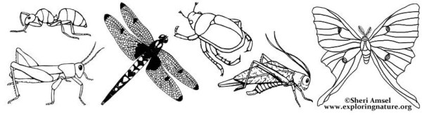 bug coloring page # 20