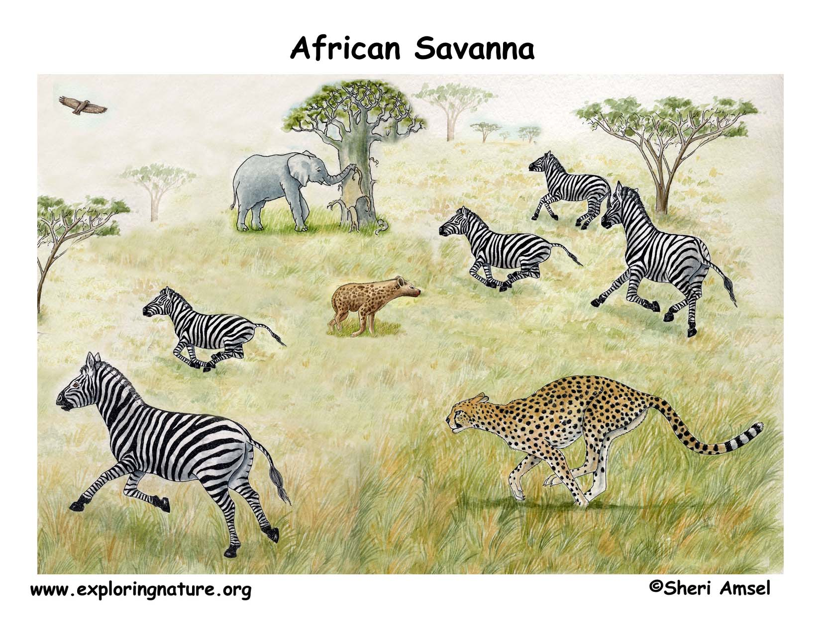 African Veldt And Savanna