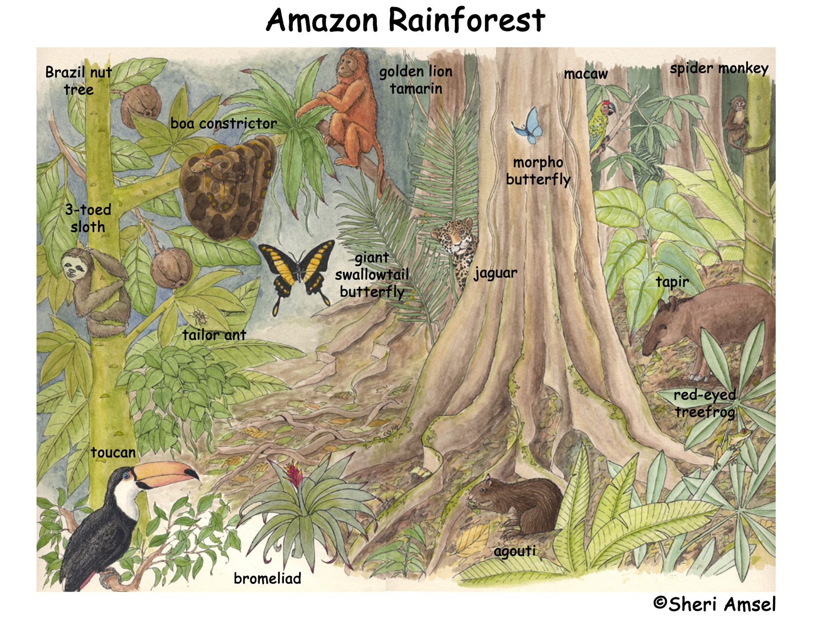 Amazon Rainforest Of South America