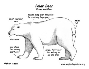 Informational Reading and Writing Class Topic: Polar