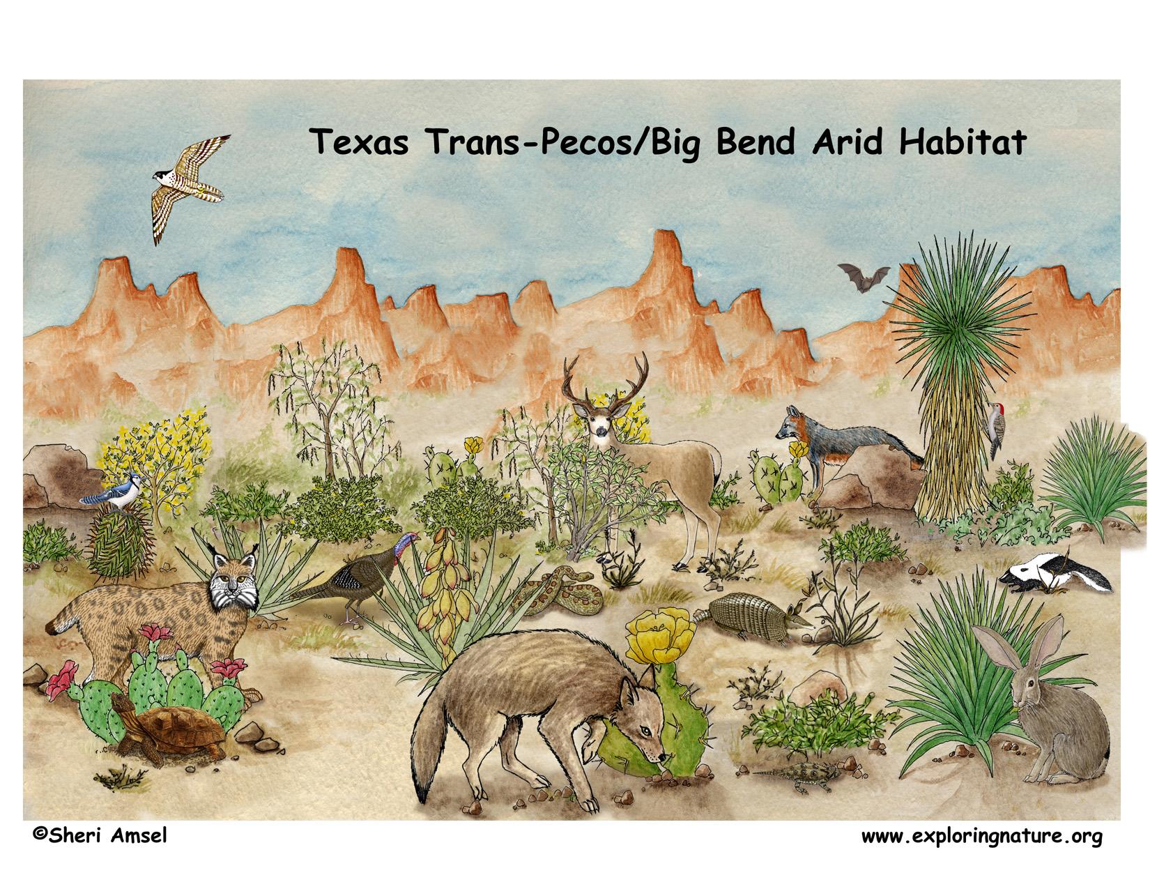 Texas Trans Pecos Big Bend Arid Habitat Poster