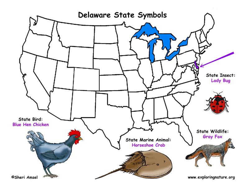 Birds In Winter In Delaware