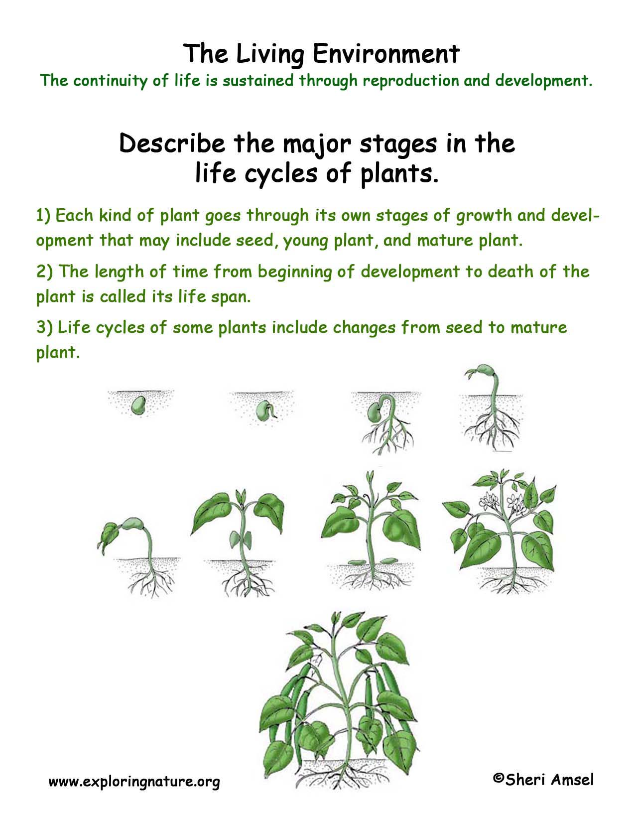 Bean Development Worksheet