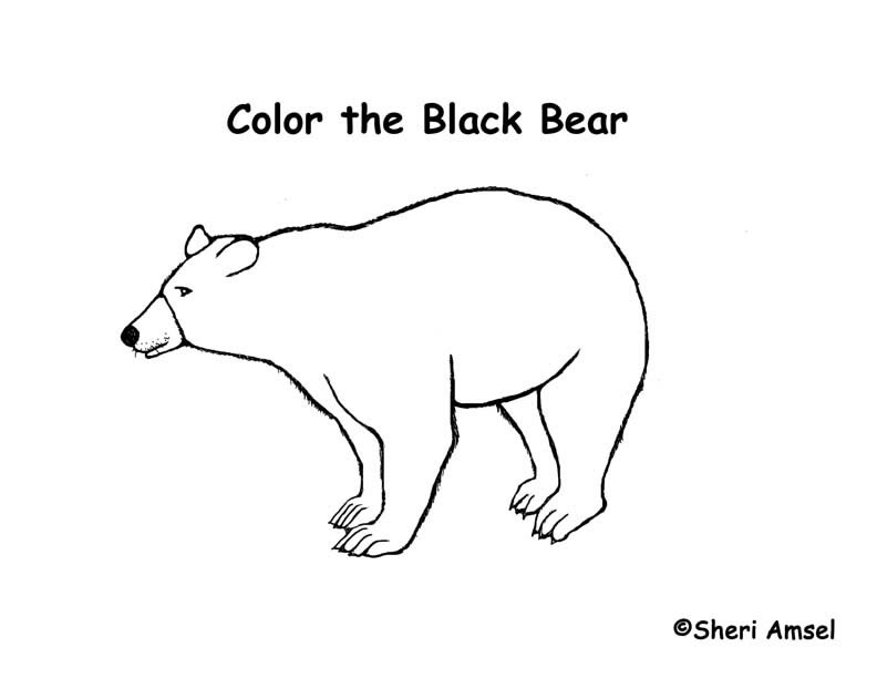 black bear coloring page cooloring com