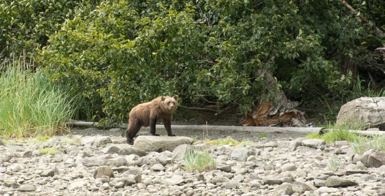 camp-bear