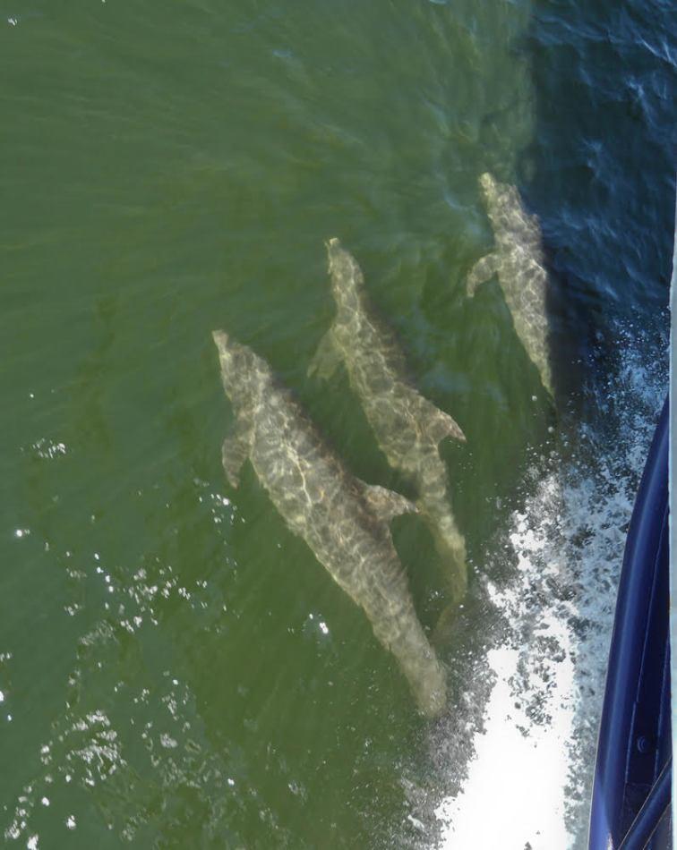 baja5-dolphins