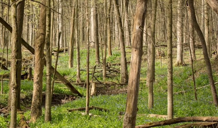 Messenger Woods (53 of 120)
