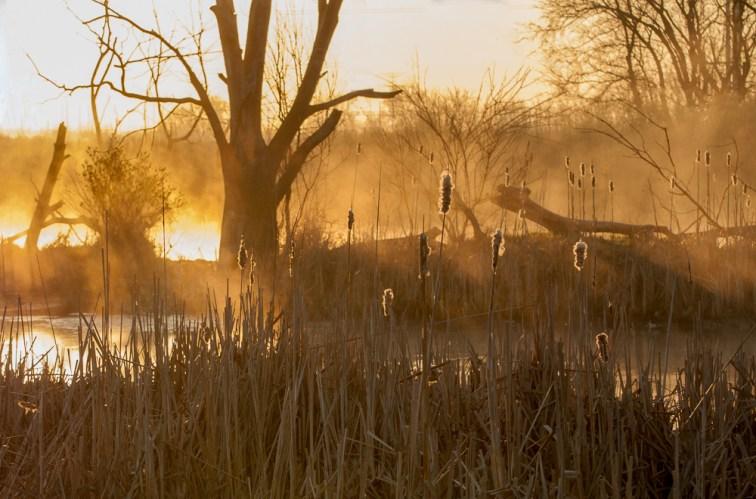 Sunrise at the last Crane Count