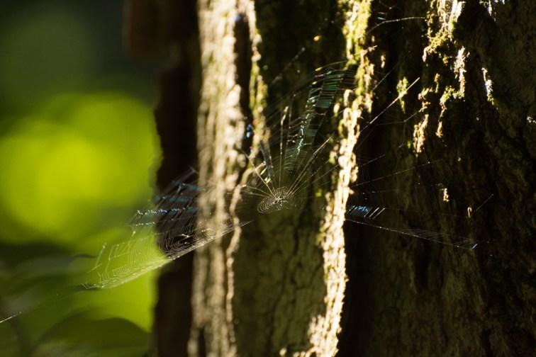 Silk in the Sun