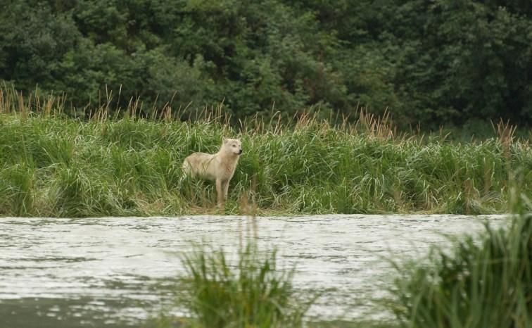 Lone Wolf (2)