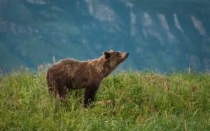 Sheila Newenham Bear Photography