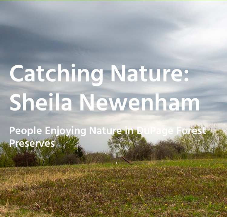 Catching Nature: Sheila Newenham title slide