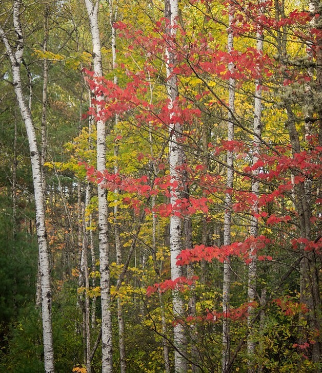Fall Nature Photography