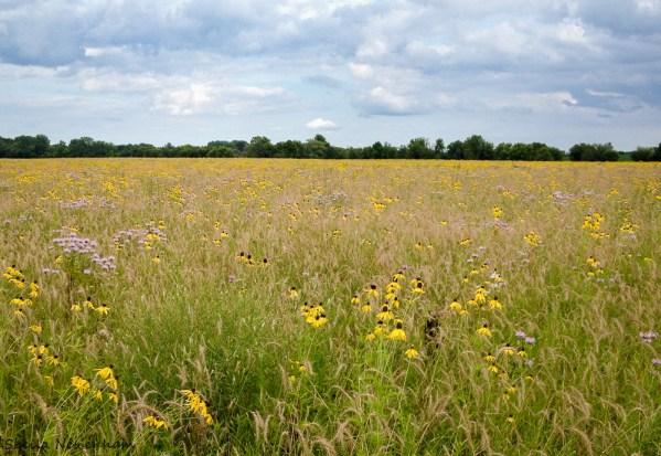Dunham Forest Preserve