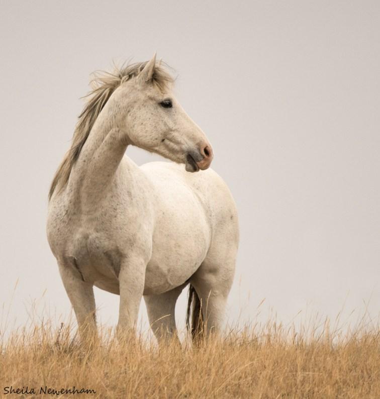 Theodoore Roosevelt National Park Wild Horses