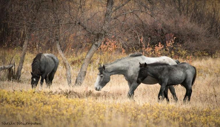 Pawing at prairie dog mound