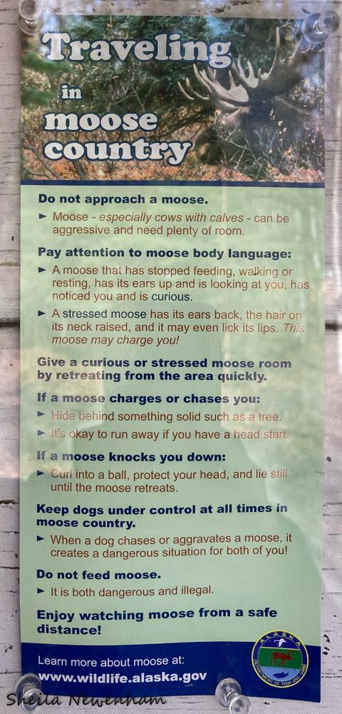 Moose infographic