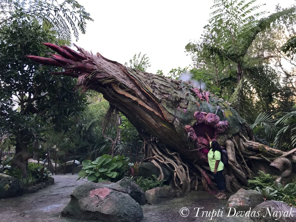 Entering world of Avatar - Pandora at Disney's Animal Kingdom