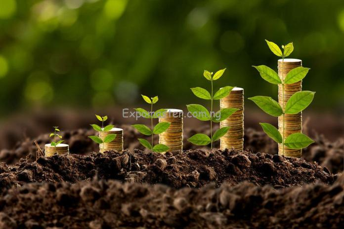 Stock market long term investor