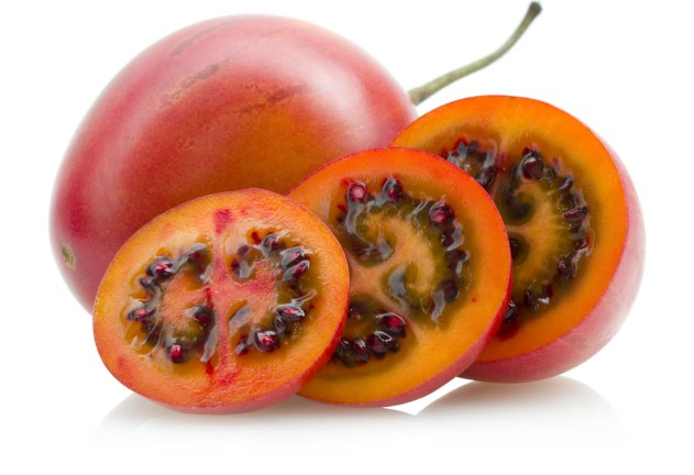 cropped-tamarillo2.jpg