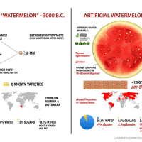 watermelonevolution