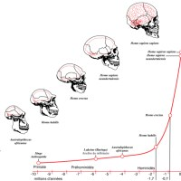 Timeline of the evolution of the brain