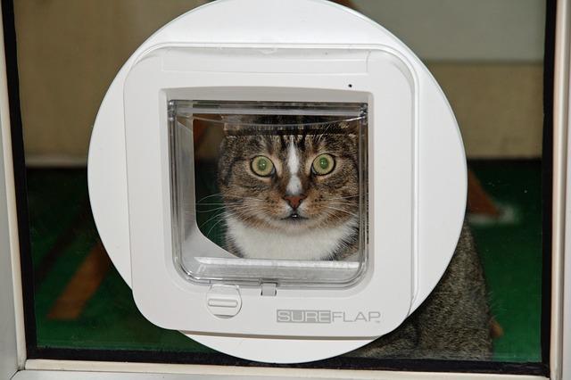 https www expressdoorsdirect co uk external doors fitting a cat flap to your external doors