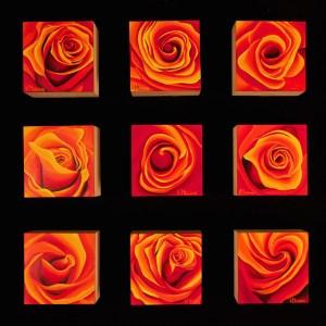 Suite of Rose Studies by Kerri Meehan