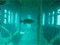 BP-25 & NYC Subway Cars - Myrtle Beach Scuba Diving Site