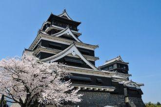 japón cerezos flor
